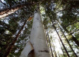 Canada's Role As Steward Of The World's Forests Matters