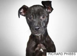 '사지 않고 입양하는 것'의 의미를 되새기는 보호소 개들의 초상 사진(화보)