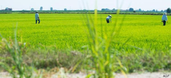 Su Monsanto-Bayer, altre InCorporations e alternative di resistenza