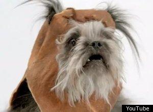 Ewok Dog