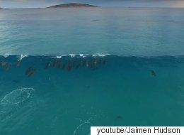 큰 파도를 만난 돌고래들이 먼 바다로 돌아가는 장면은 정말 장관이다(영상)