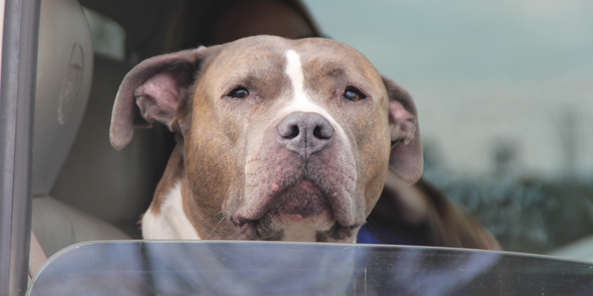 cause and effect pit bulls The president of the american pit bull foundation on why responsible a june 20th timecom piece by there is always an underlying cause to a bite or.