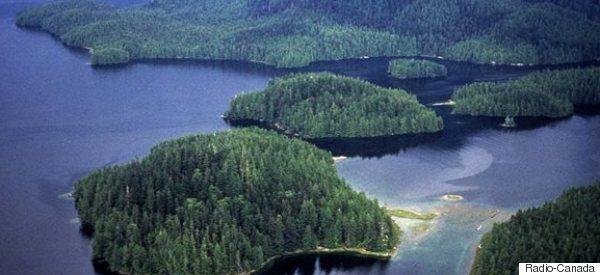 Appui royal pour une forêt canadienne mythique