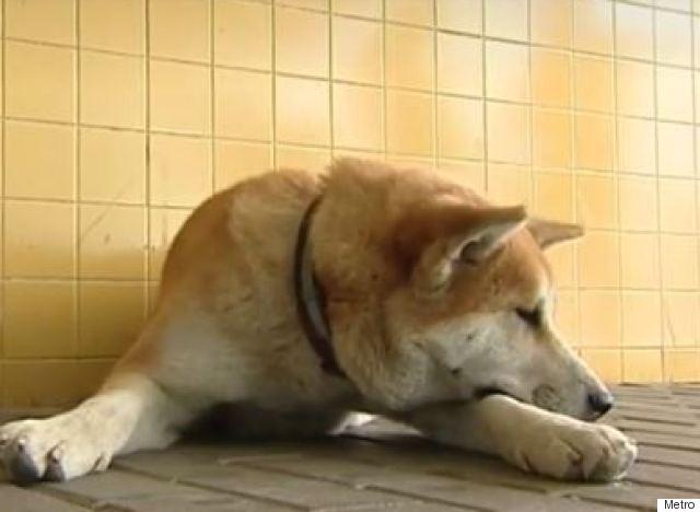 maya dog