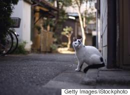 서울에서 차에 치여 죽은 동물 10마리 중 8마리는 '고양이'다