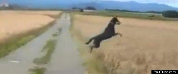 Happy Dog Jumping