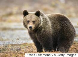 Une ourse trouve une grenade dans un zoo