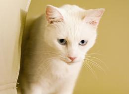 يحاول الاختباء خجلاً.. شاهد محاولات هذا القط للهروب من التصوير!