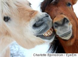 한라산에서 실종됐던 말 20마리가 발견됐다