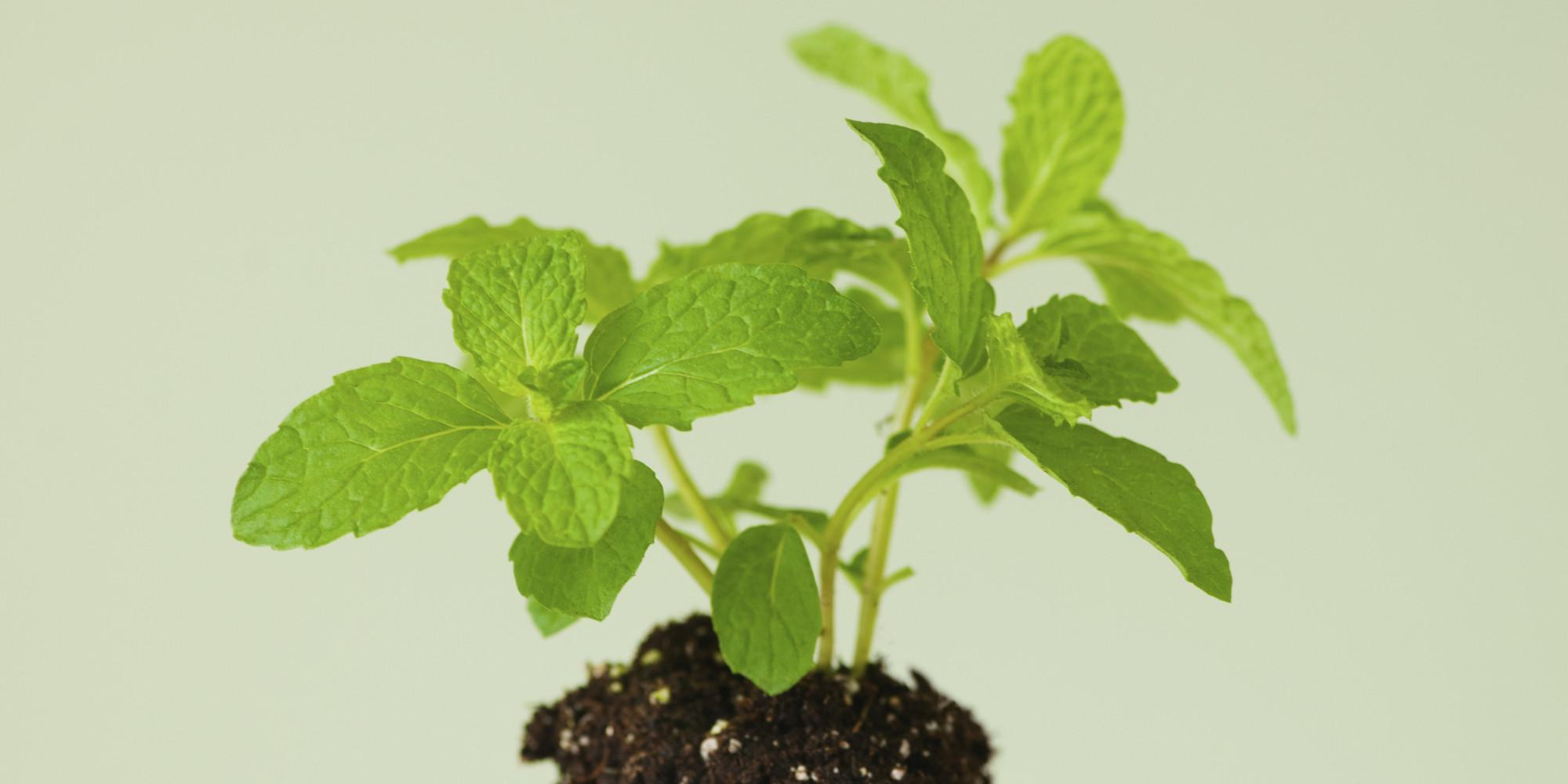 Carbon Dioxide: Pollutant Or Plant Food?   David Suzuki