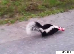 ► Ontario Man Liberates Skunk From Coke Can Prison