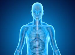 رئة جديدة كل 3 أسابيع.. حقائق علمية مذهلة عن جسم الإنسان