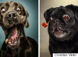 Les expressions faciales de ces chiens qui attrapent leur friandise sont hilarantes (PHOTOS)