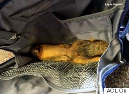 8-Year-Old Puts Dead Squirrel In Backpack, Leaves Mom Horrified