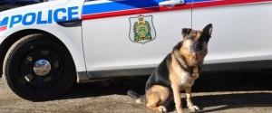 DIEGO POLICE DOG