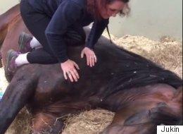 Ce cheval refuse de se réveiller
