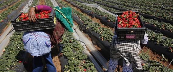 ECONOMIC FARMER MOROCCO