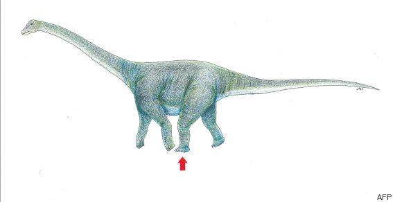 dibujo tiranosaurio