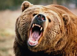 فيديو يحظى بملايين المشاهدات لرجلٍ تعرَّض لهجومٍ من قبل الدببة.. مؤسِّس فيسبوك يضغط