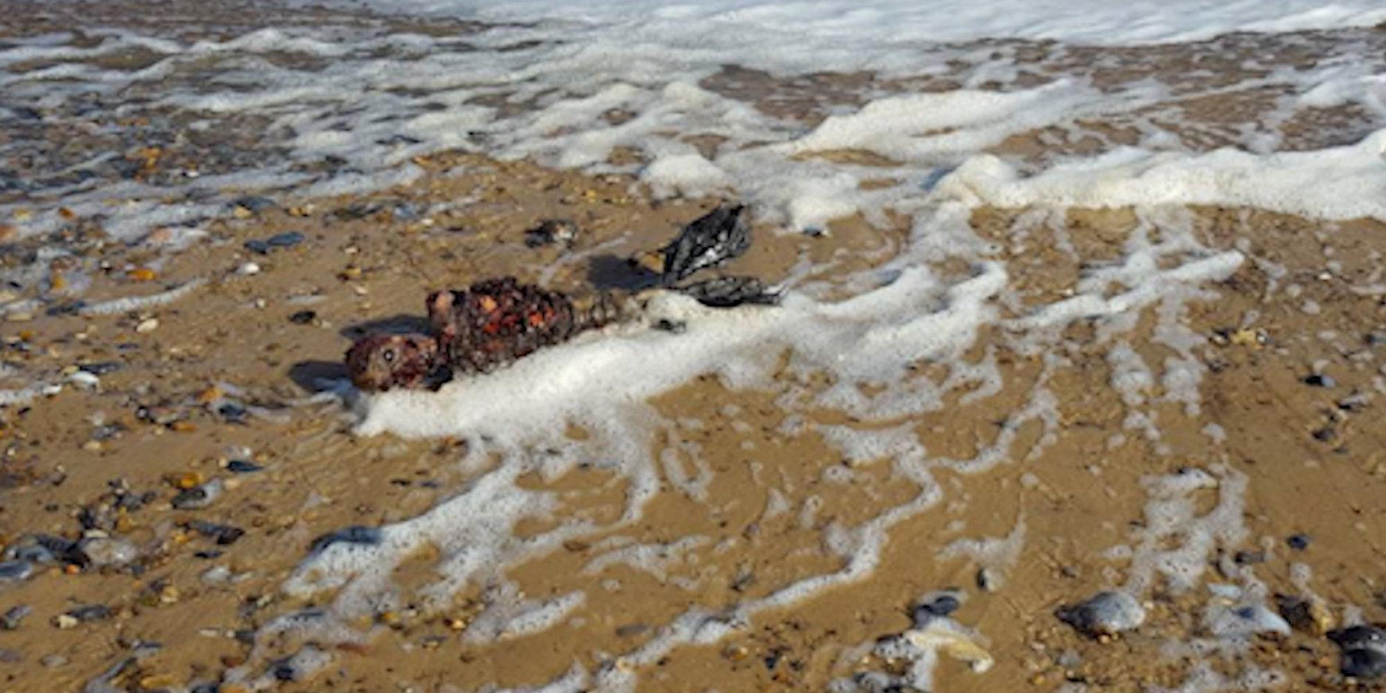 il fait croire aux internautes qu u0026 39 il a trouv u00e9 le corps d u0026 39 une sir u00e8ne sur le bord d u0026 39 une plage