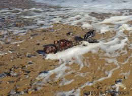 Cet homme a-t-il trouvé le corps d'une sirène échouée?
