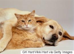 Un chat lèche son ami canin pour l'aider à s'endormir