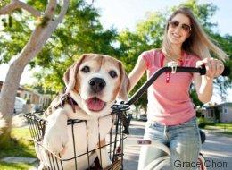 Ces superbes photos illustrent le lien spécial qui unit un chien et son maître