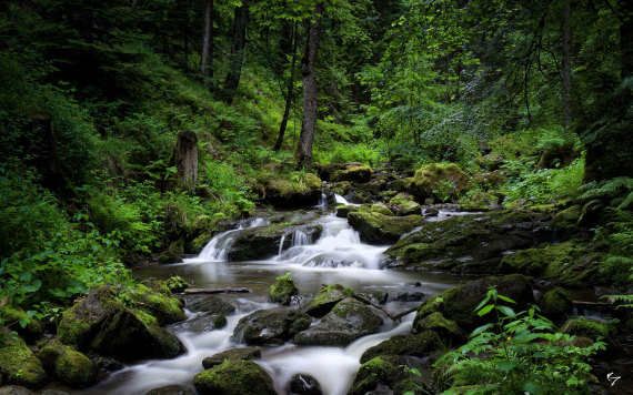 هل تعلم ما هي أكثر 5 غابات رعباً حول العالم O-PIC-570