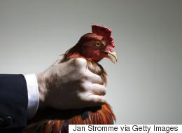Un aspect positif dans la défaite du projet de loi C-246 sur la protection des animaux
