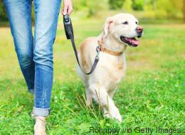 Promener son chien augmente le sentiment de sécurité dans son quartier