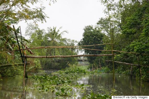 monkey bridges vietnam
