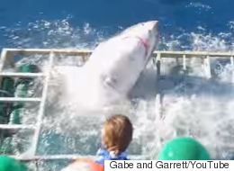 Frightening Video Shows Great White Shark Smashing Cage With Diver Inside