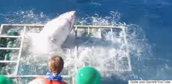 shark cage attack