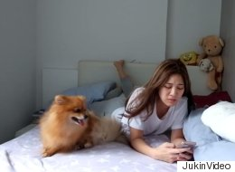 Ce chien veut avoir toute l'attention de sa maîtresse
