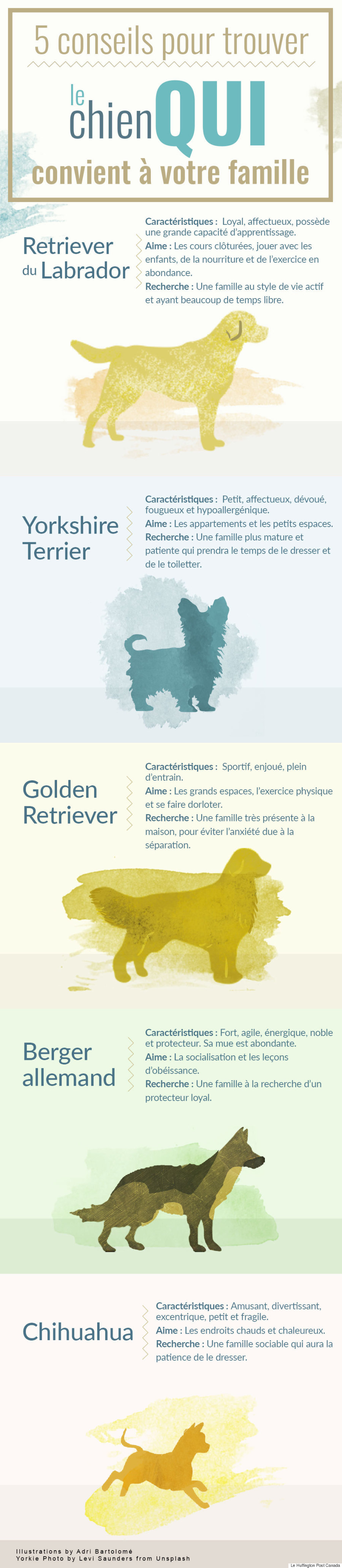 dog breed french