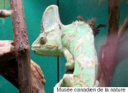 Le Musée canadien de la nature à découvrir à Ottawa