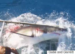 La vidéo terrifiante d'un homme piégé dans une cage avec un requin blanc