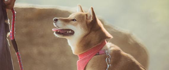 AKITA DOG MAN