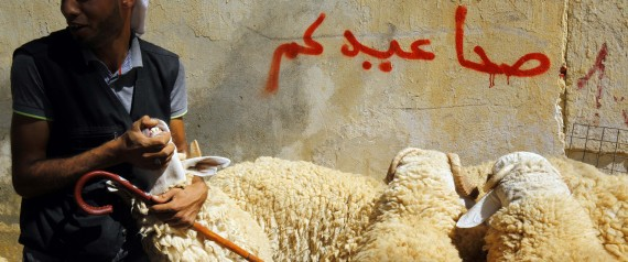 SHEEP ALGERIA
