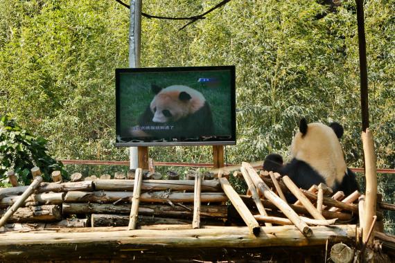 the panda jia jia