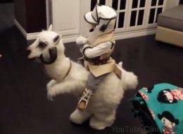 Ce petit garçon a le meilleur déguisement «Star Wars» possible