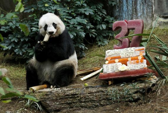 E' morta a 38 anni Jia Jia la decana dei panda giganti