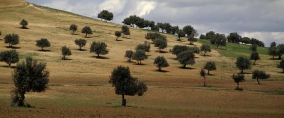 TUNISIA TREES