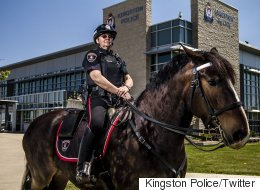 Ontario Partiers Charged For Allegedly Slapping Police Horse