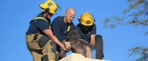 TUCSON CHIMNEY RESCUE