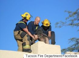 Man Wedged In Chimney Had Really Sad Excuse For Climbing In
