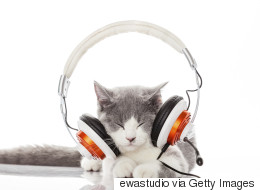 Un album de musique spécialement créé... pour les chats!