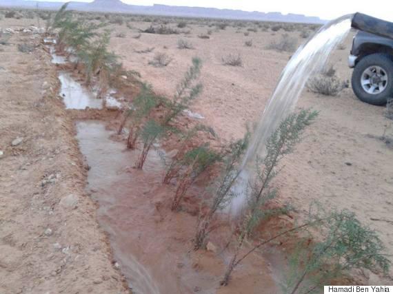 desert sahara tunisia agriculture
