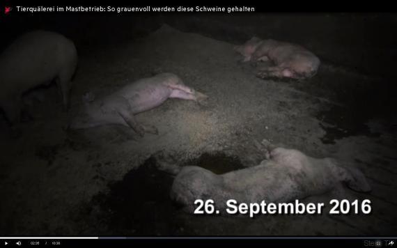 sterntv zeigt metzgerei kunden woher ihr schweinefleisch kommt. Black Bedroom Furniture Sets. Home Design Ideas