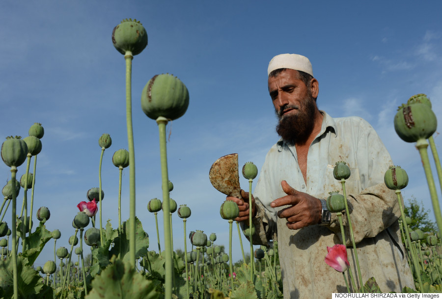 opium afghanistan
